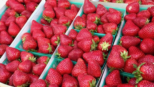 Strawberries are in season. We have recipes