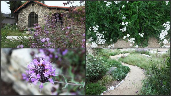 Prepare to have garden envy at L.A.'s premier native plant tour