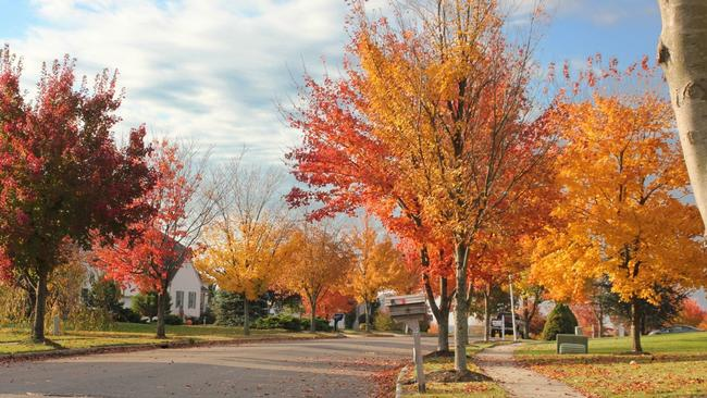 In Search Of The Perfect Front Yard Tree