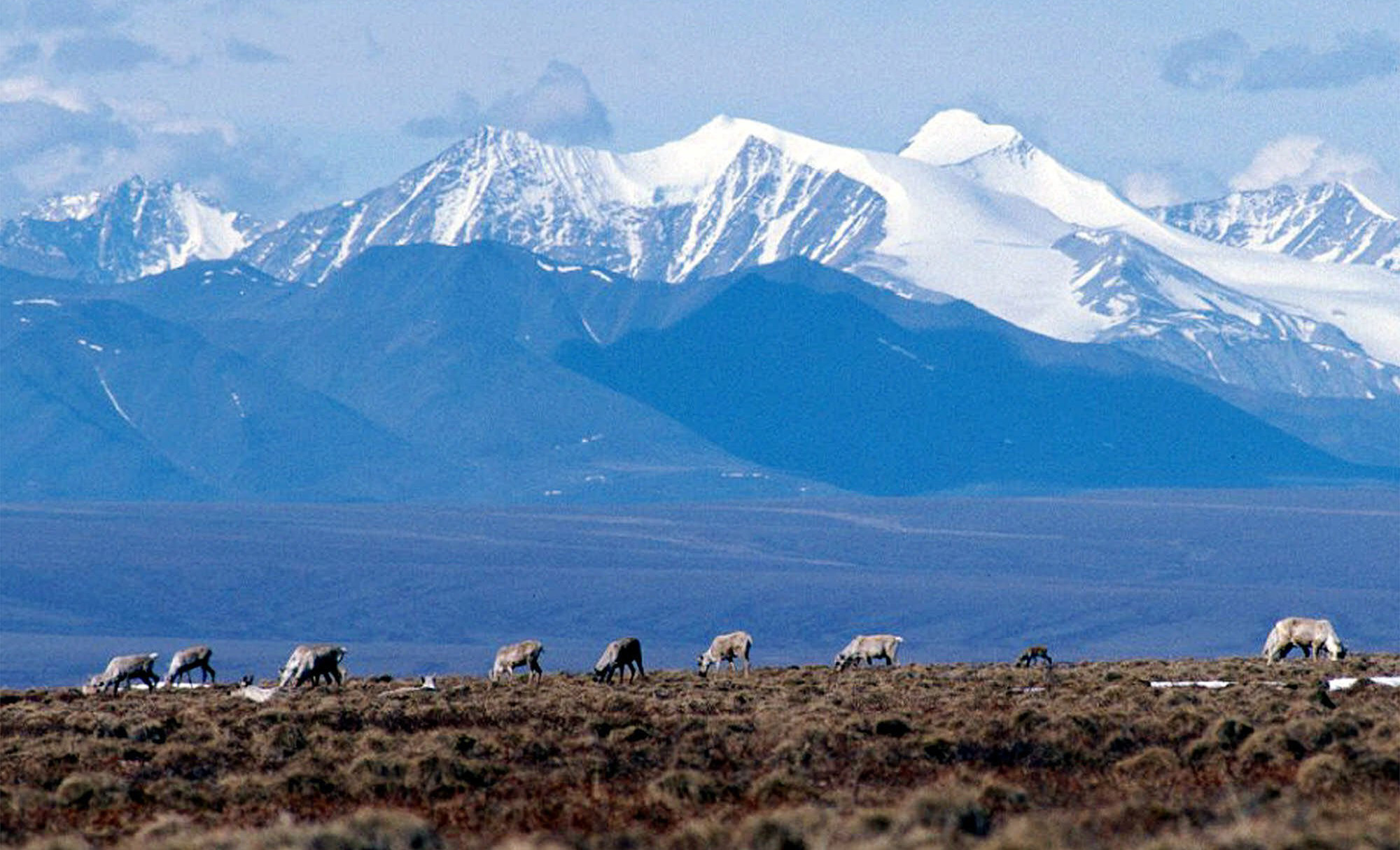 Congress votes to allow controversial hunting practices in Alaska