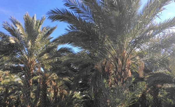 Shake Up A Trip To The California Desert At Date Palm Farm