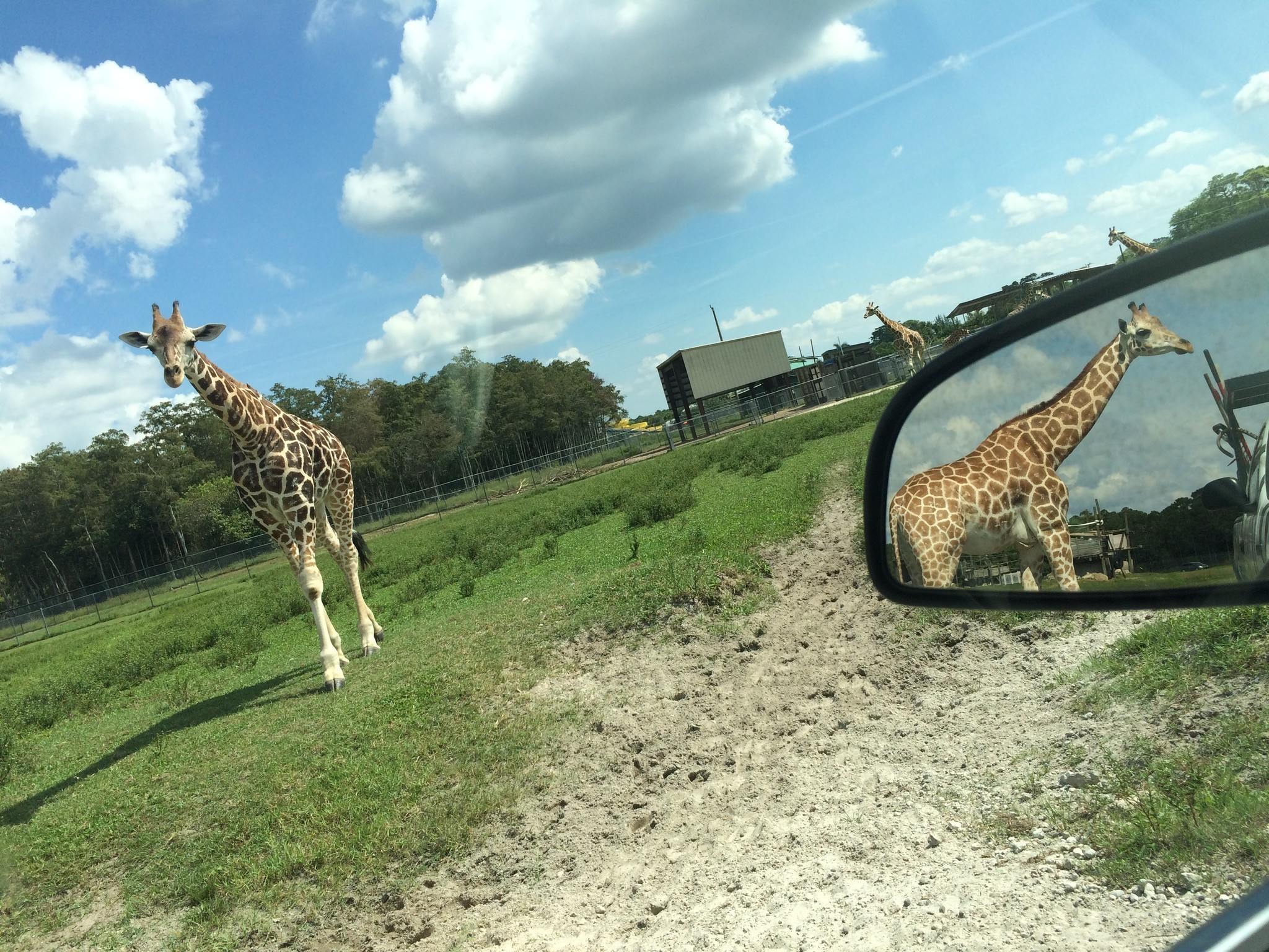 Get your wild side on in Palm Beach County - Orlando Sentinel