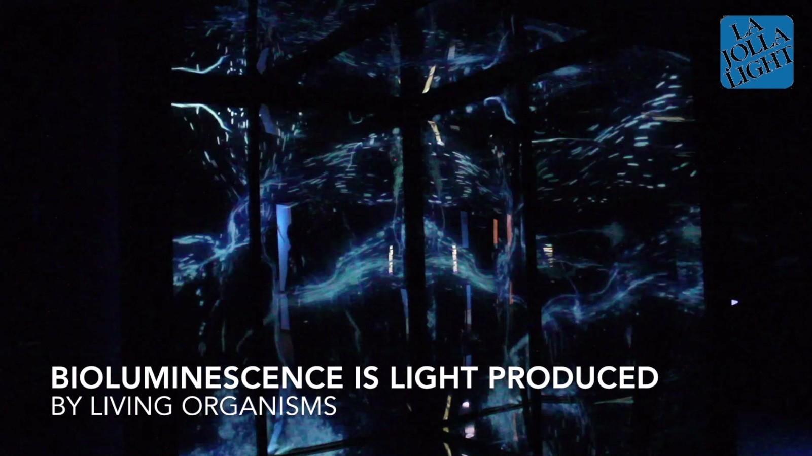 Experience La Jolla S Birch Aquarium Bioluminescence