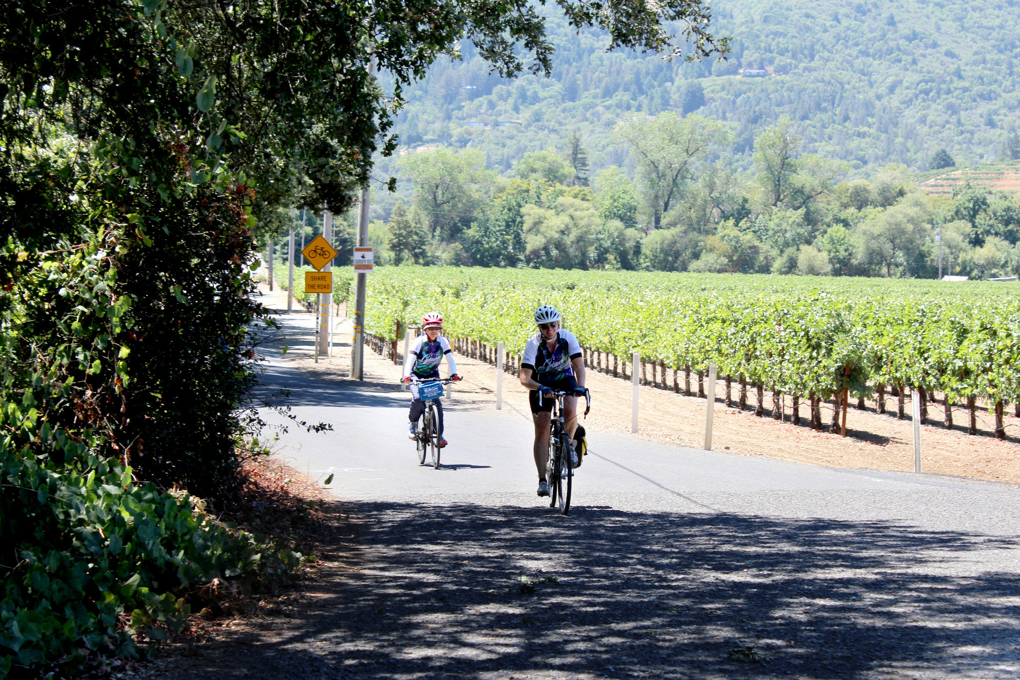 Cyclists riding down West Dry Creek Road near Healdsburg, Calif.