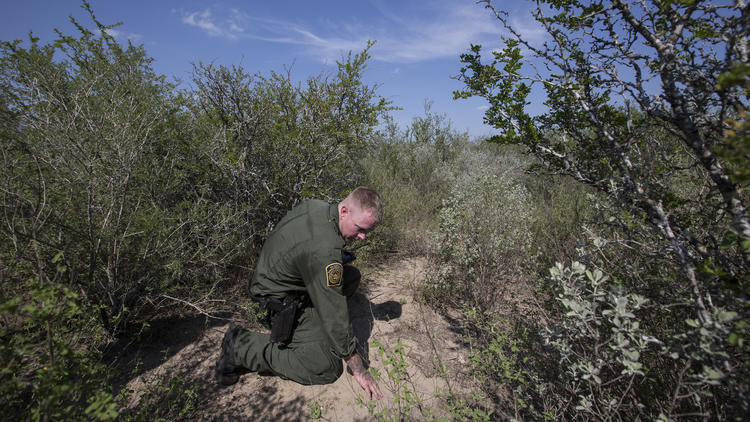 U.S. Border Patrol Agent Dave Thomas examines tracks left by migrants who ran into heavy brush to ev