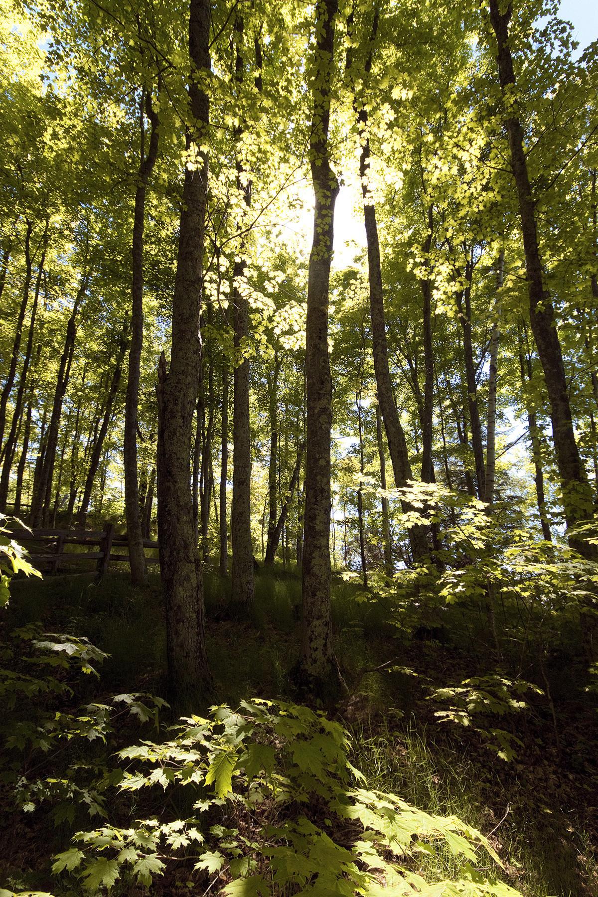 Fairchild\'s Tropical Garden Column: Pruning a tree? Learn the basics ...