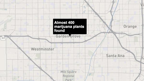 Police Find Almost 400 Marijuana Plants In A Garden Grove
