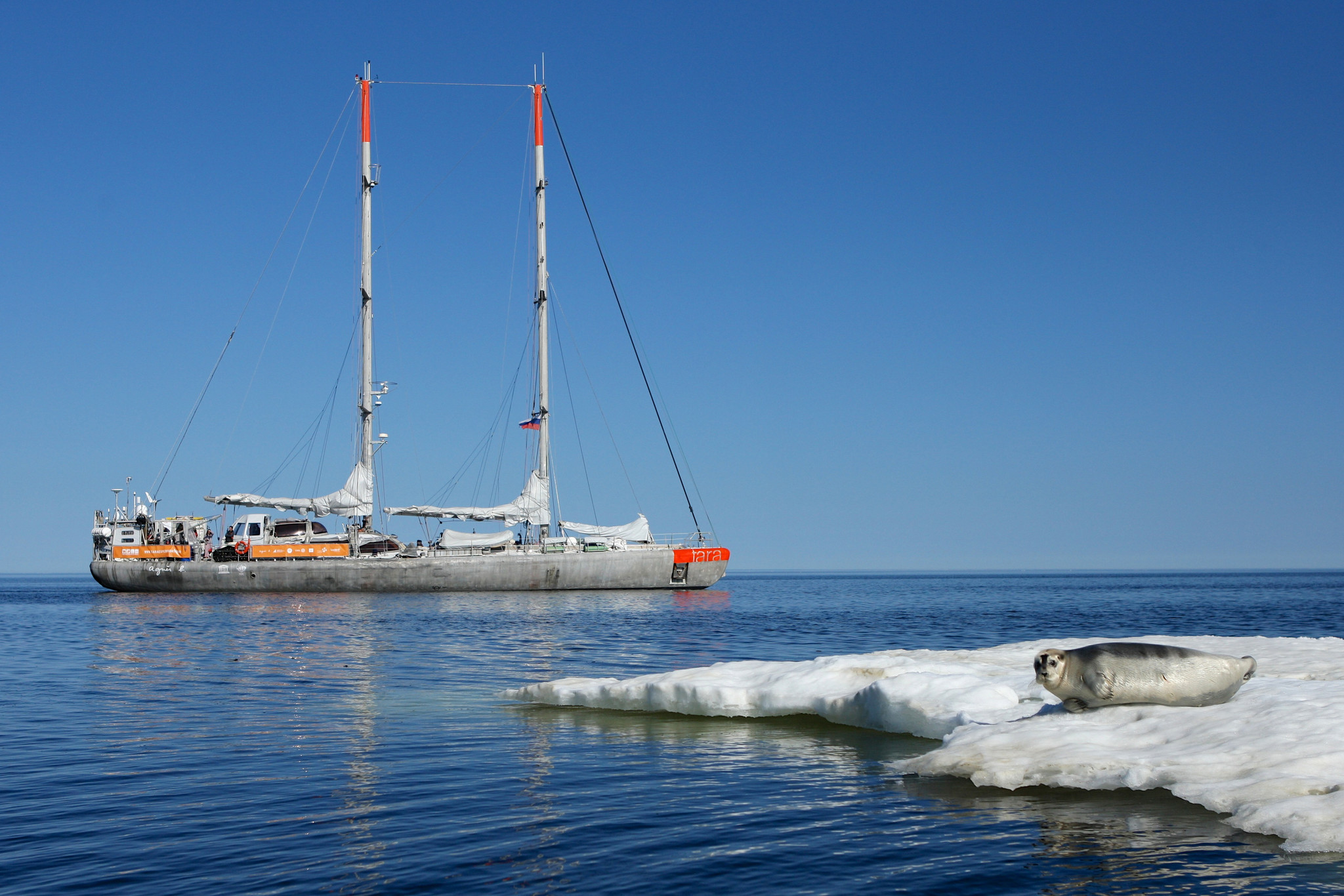 A seal lies on an iceberg in front of the research vessel Tara.