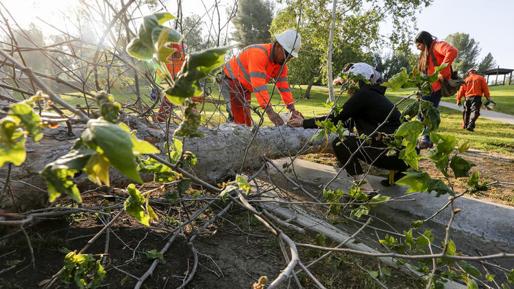 The trees that make Southern California shady and green are dying. Fast.