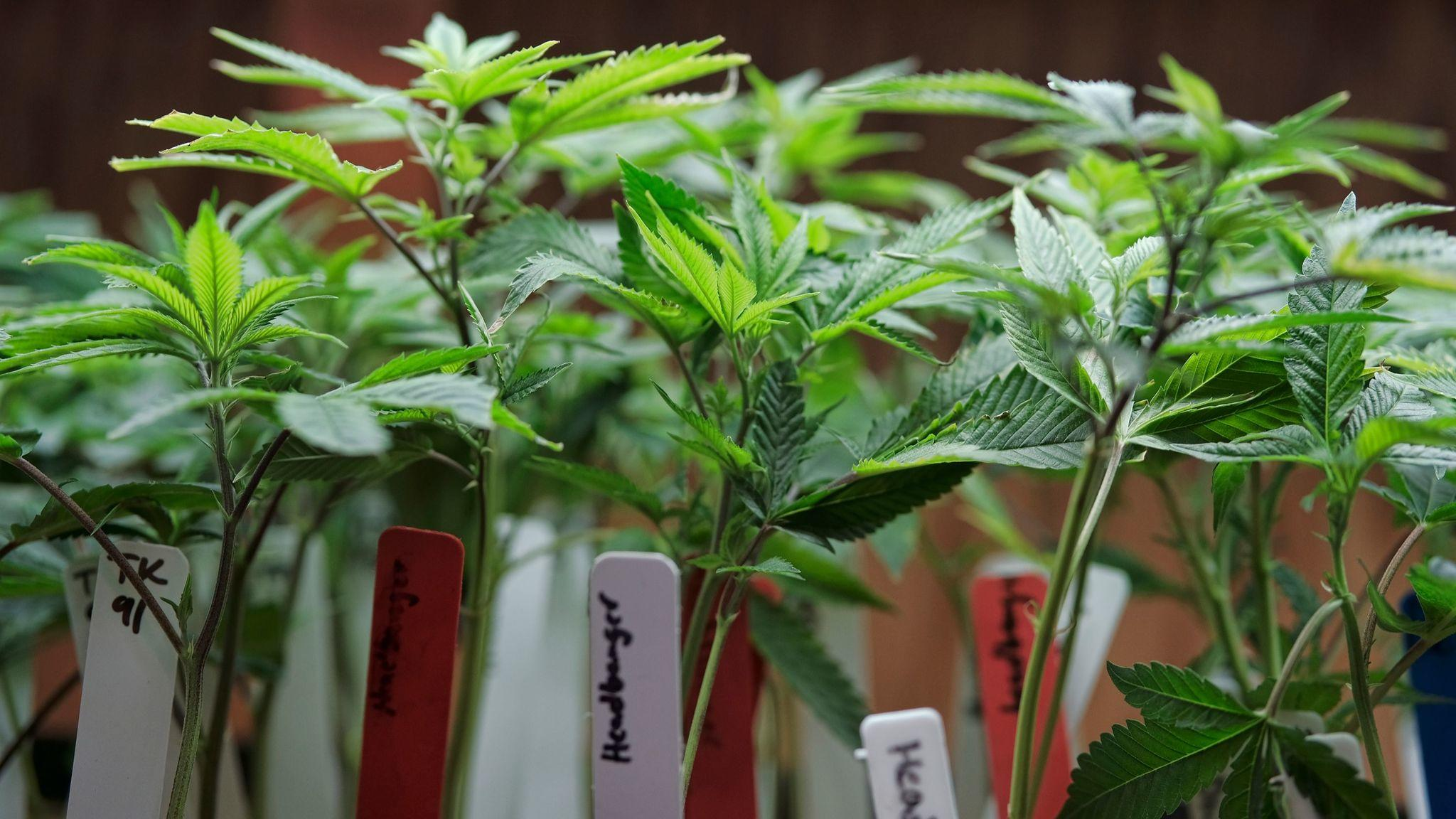 An unlikely battle over marijuana sales has broken out in pot-friendly San Francisco. (Richard Vogel / Associated Press)