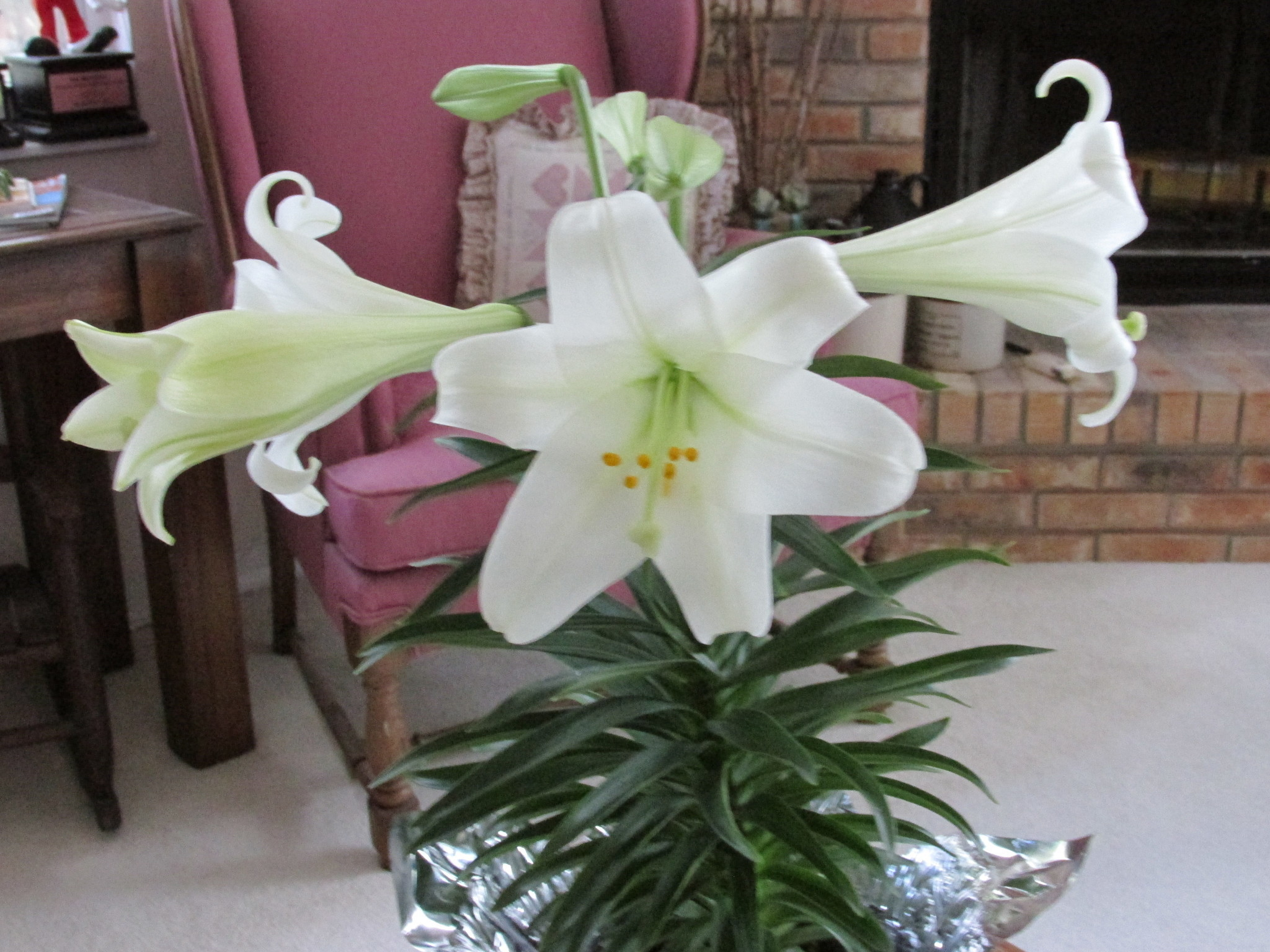 Plant Doctor Easter Lilies Are Repeat Performers Orlando Sentinel
