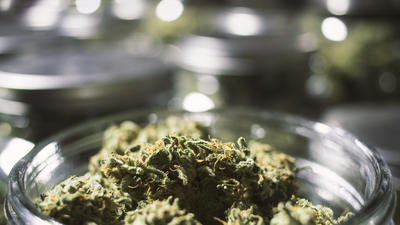 UConn Researchers Probe Health Benefits Of Marijuana And Chili Peppers