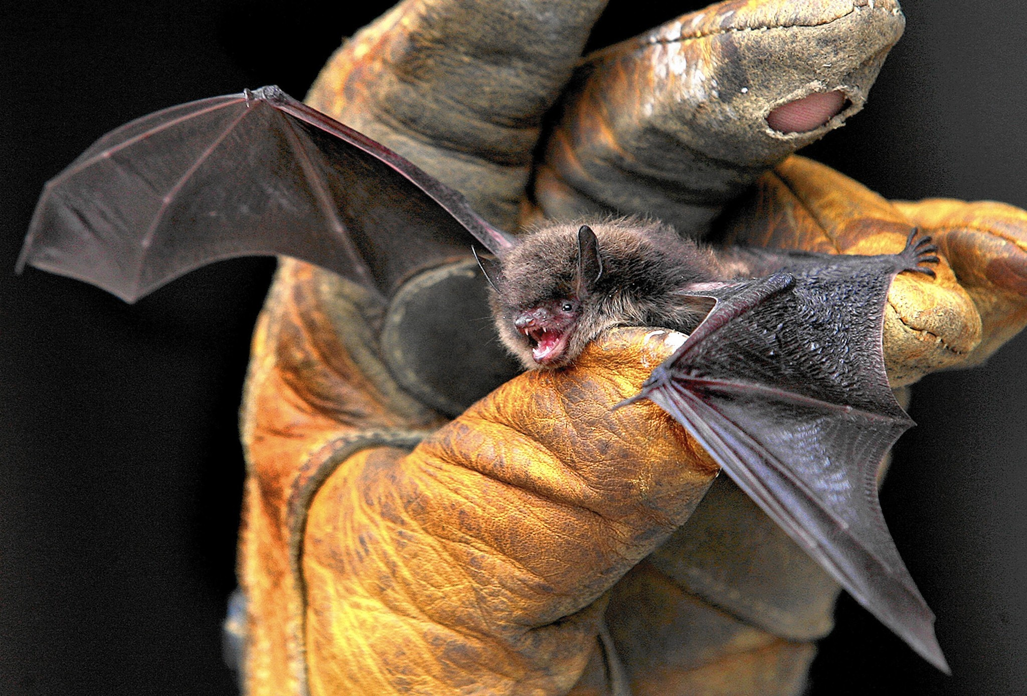 La Crosse News >> Cook County's first rabid bat of the year found in La ...