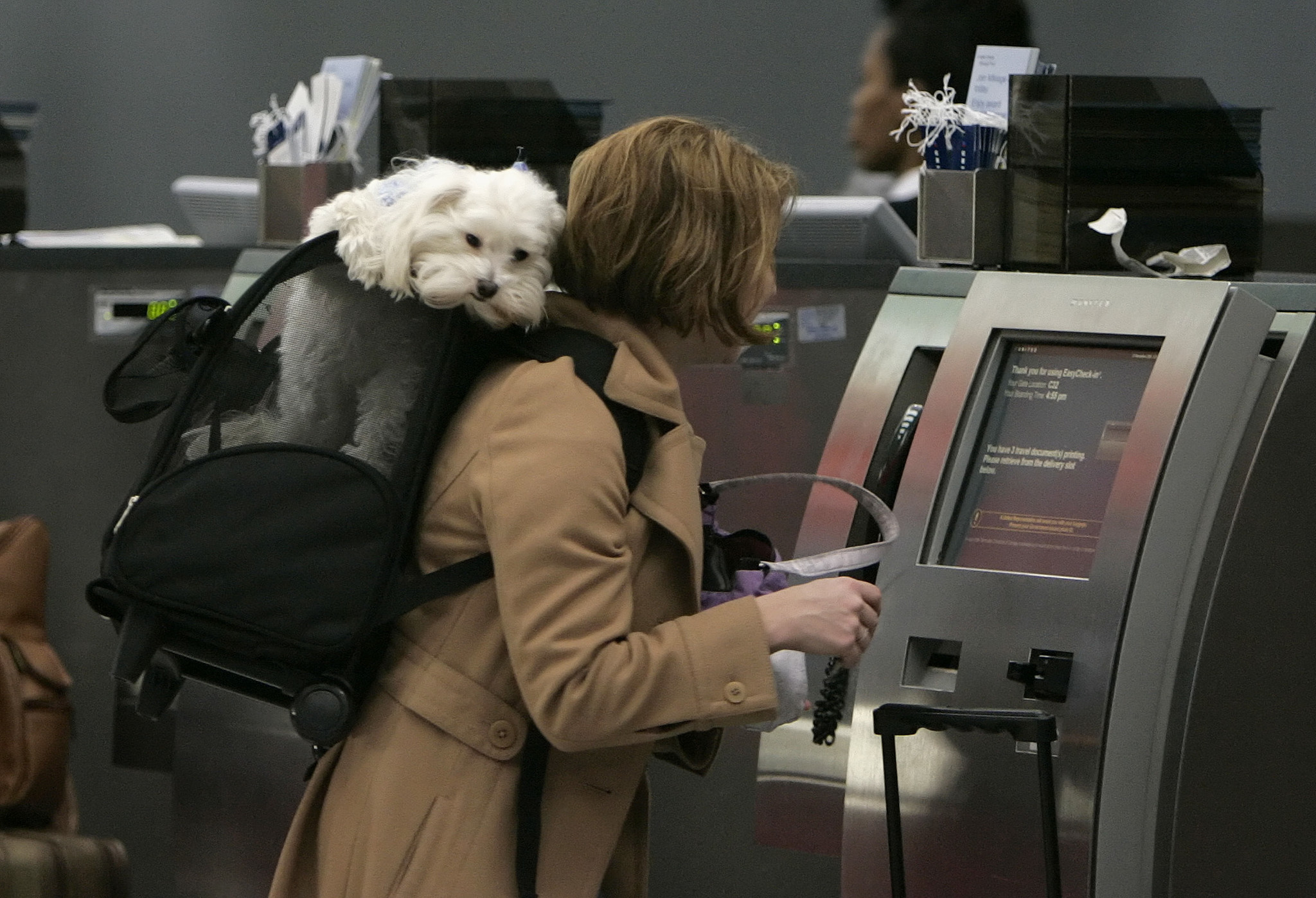 Putting a pet on a plane here 39 s what you need to know for Air travel with dog in cabin