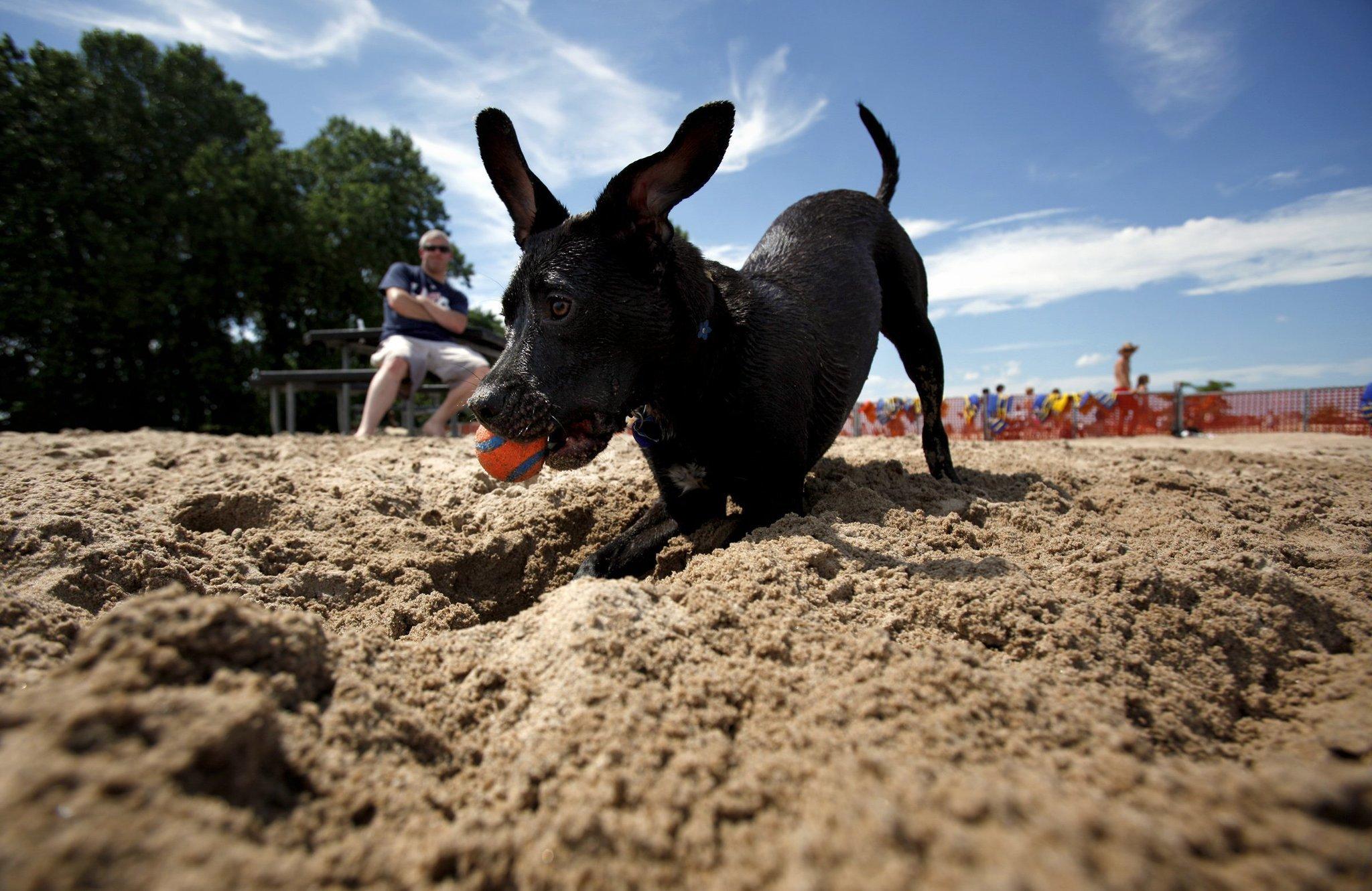 how to correct u2014 or reward u2014 a dog u0027s digging habit chicago tribune