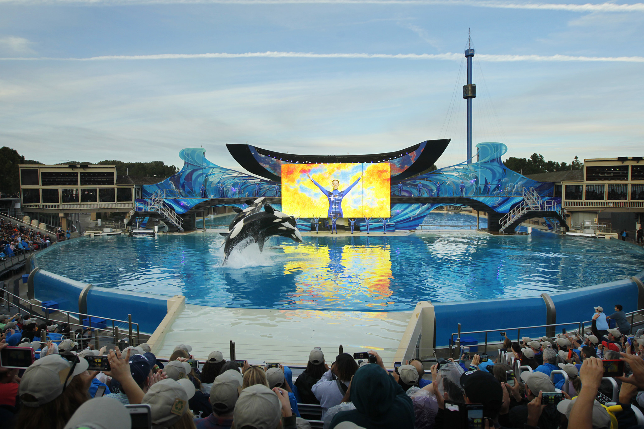 sea world Come celebrate the wonders of the sea at seaworld® san diego experience the amazing shamu show, and thrilling rides like journey to atlantis®, shipwreck rapids&#174 and wild arctic&#174 and more.