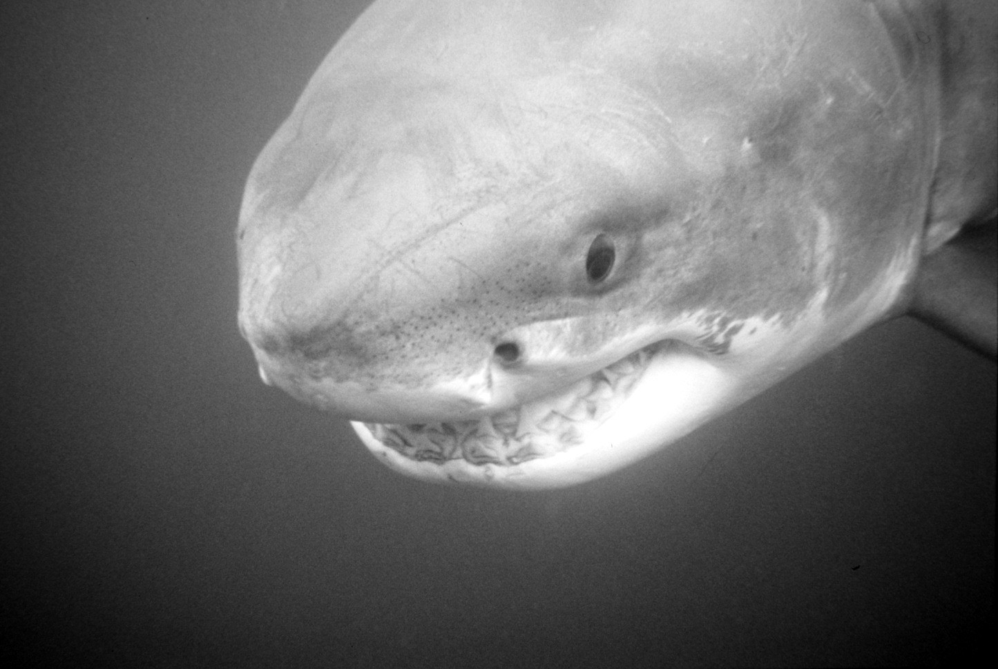 are there really more sharks prowling local beaches the san