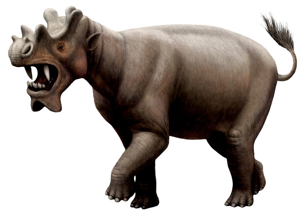 A whole lot of extremes in one: Unitharium had a large body, dagger like-teeth, a tiny brain, and some intriguing bony horns. It lived about 40 million years ago.