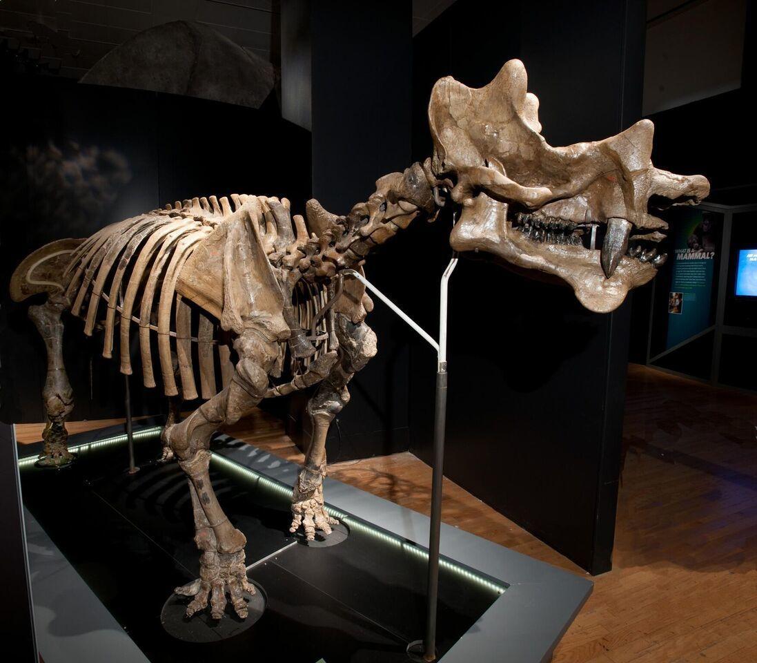The fossil version of Unitharium.