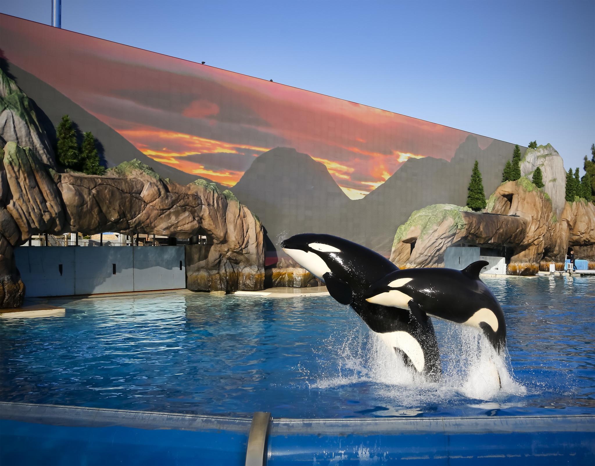 Will new killer whale encounter resurrect SeaWorld? - The San ...