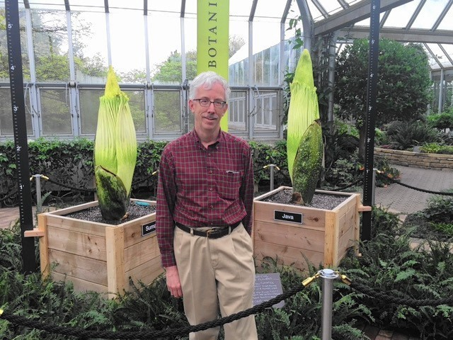 Chicago Botanic Garden Waits Watches For Dual Corpse Flower Bloom Glencoe News