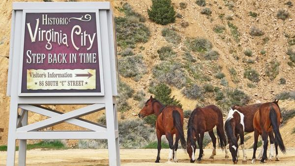 Roam with the wild horses on a weekend escape to Reno