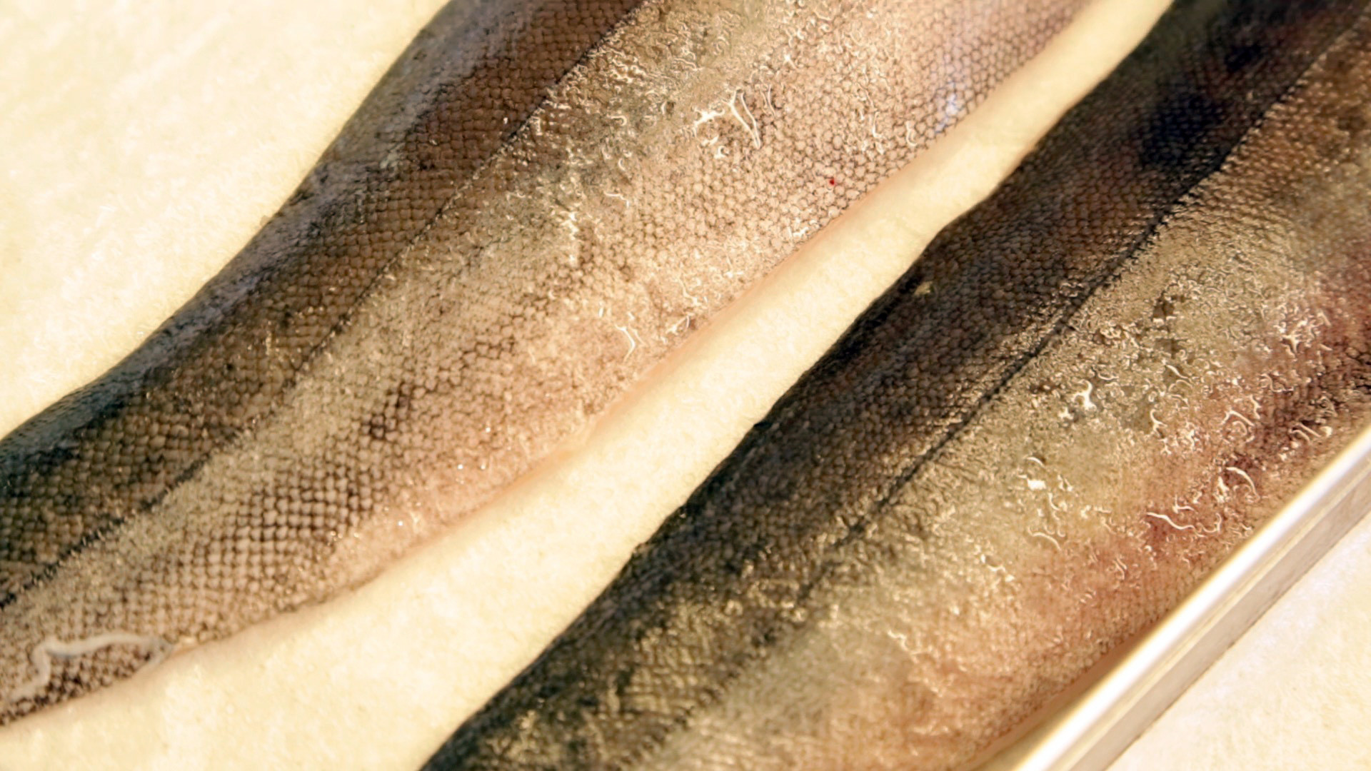 Black cod is one type of Pacific rock fish.