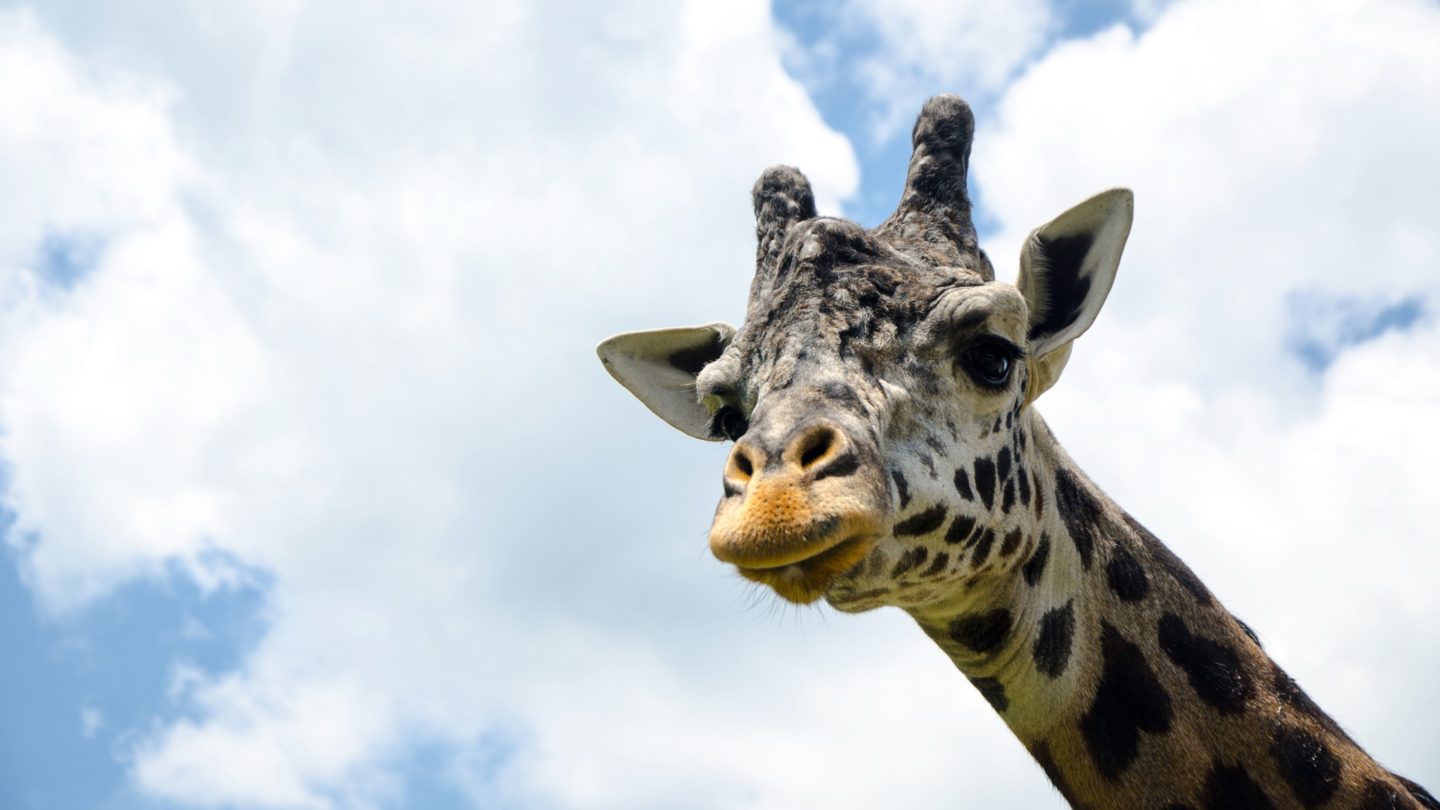 young giraffe dies at lehigh valley zoo the morning call