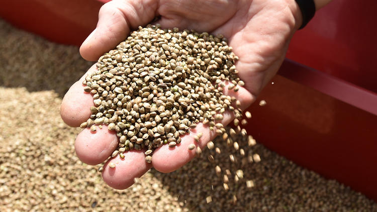 PICTURES: Hemp seeds sown legally in Saucon Valley