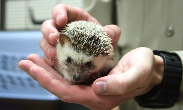 hedgehogs found dumped and left to die in ocean beach trash can