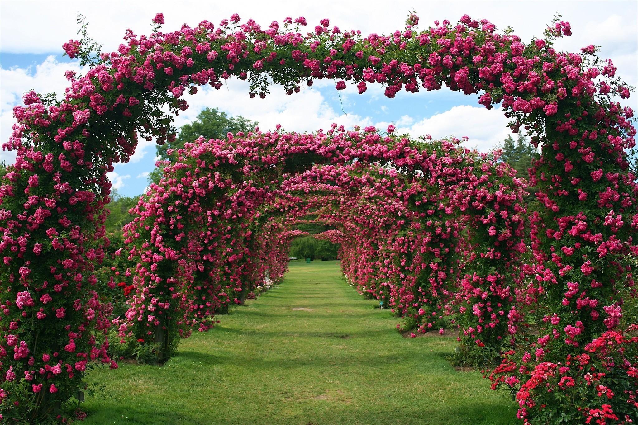 Write stuff local author fest in avon free rose garden for Landscape my garden