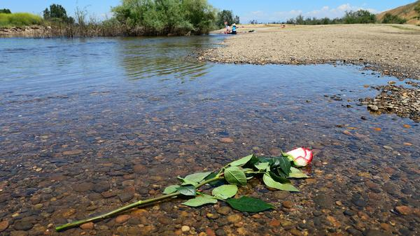A rose lies in the shallow water on the bank of the San Joaquin River near the spot where Neng Thao drowned.