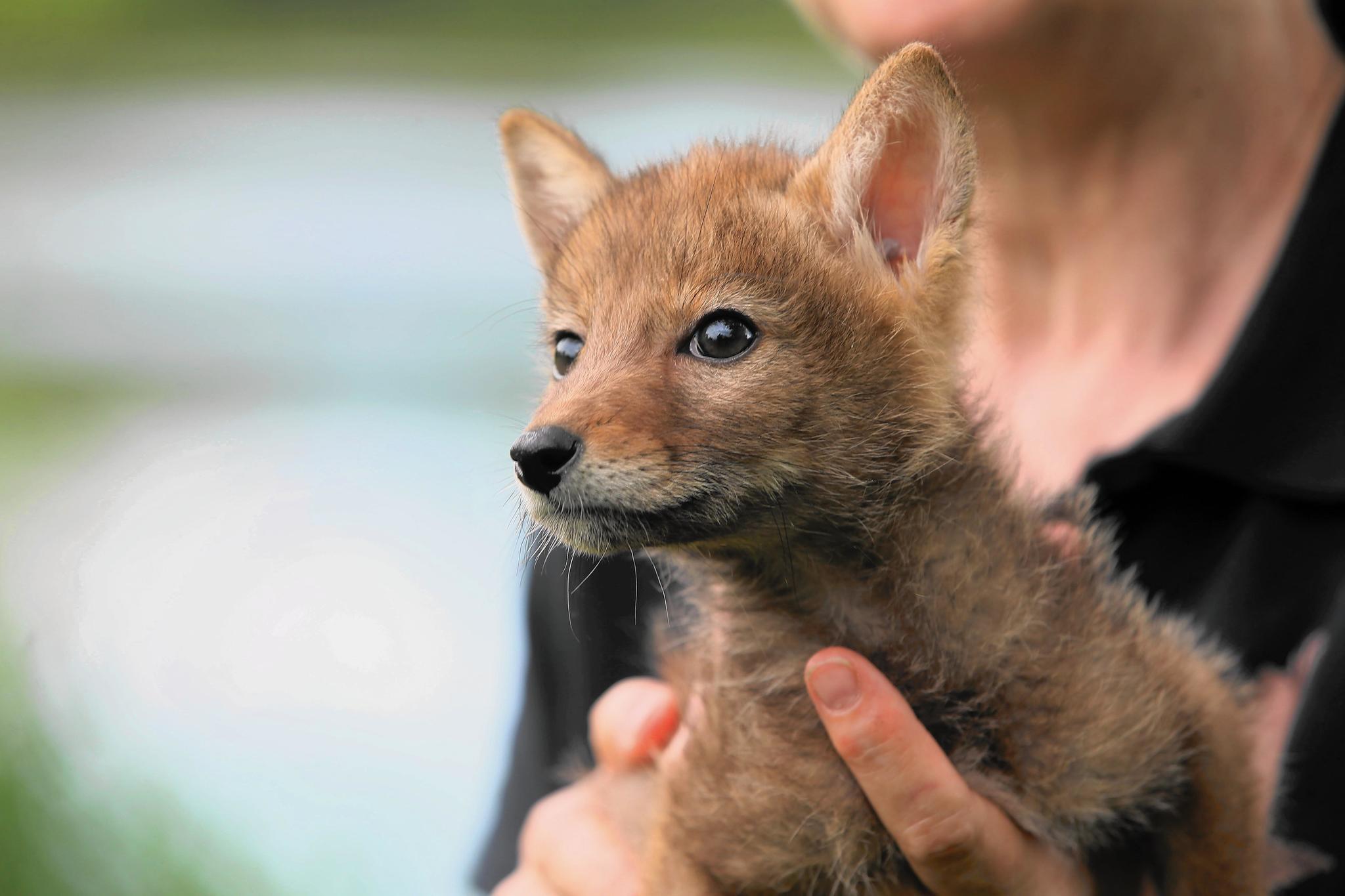 Illinois Department Of Natural Resources Wildlife Rehabilitation