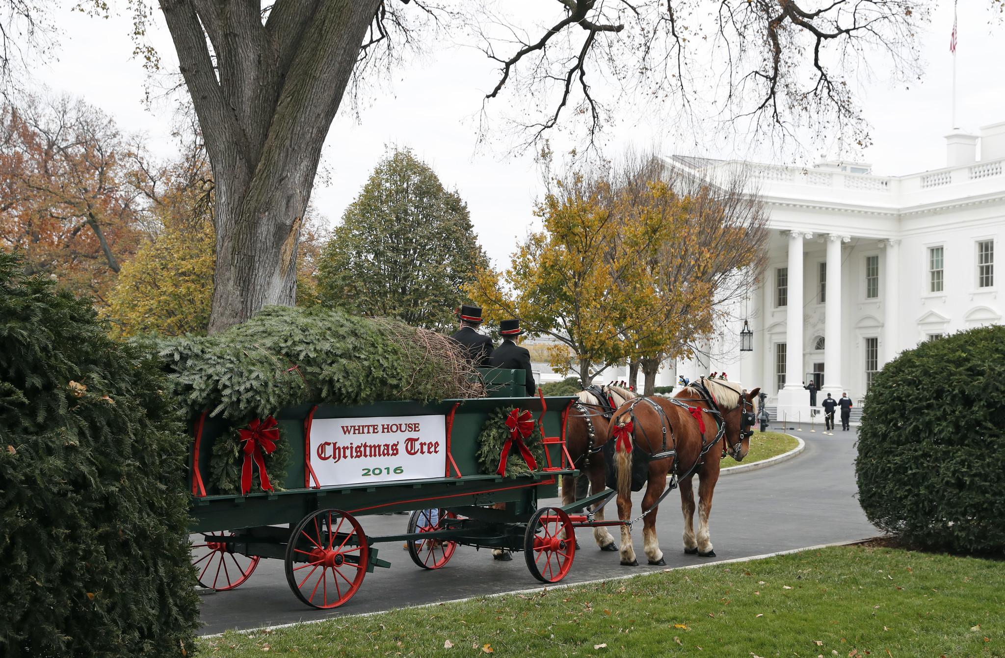 michelle obama recibe el rbol de navidad de la casa blanca hoy chicago