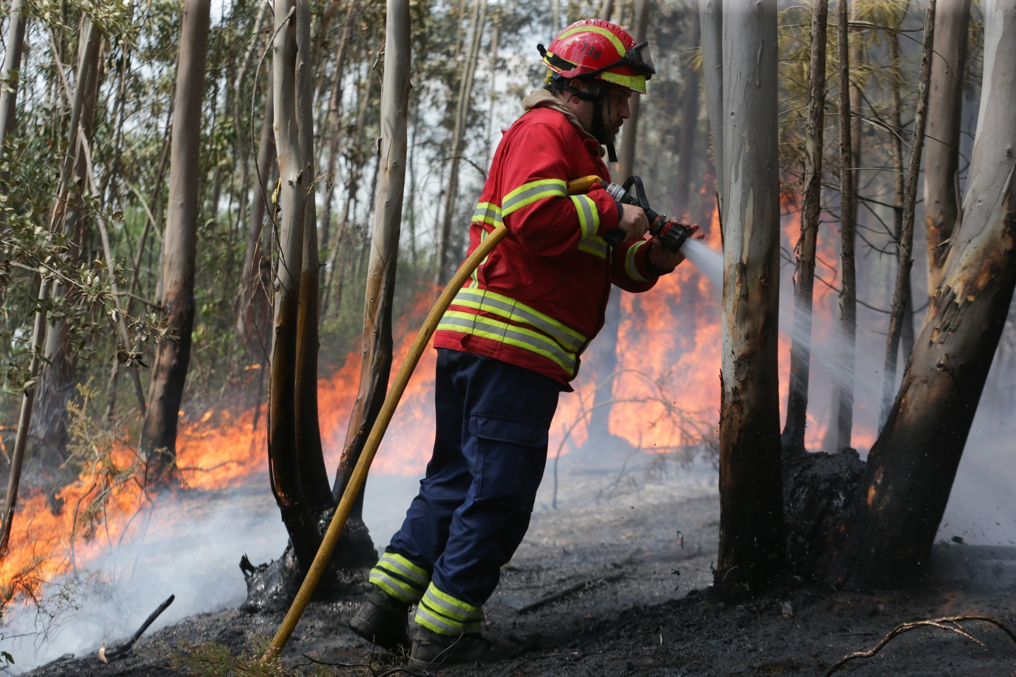 reeling from its deadliest forest fire portugal finds a villain