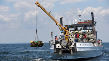Expanding oyster habitat with reef balls