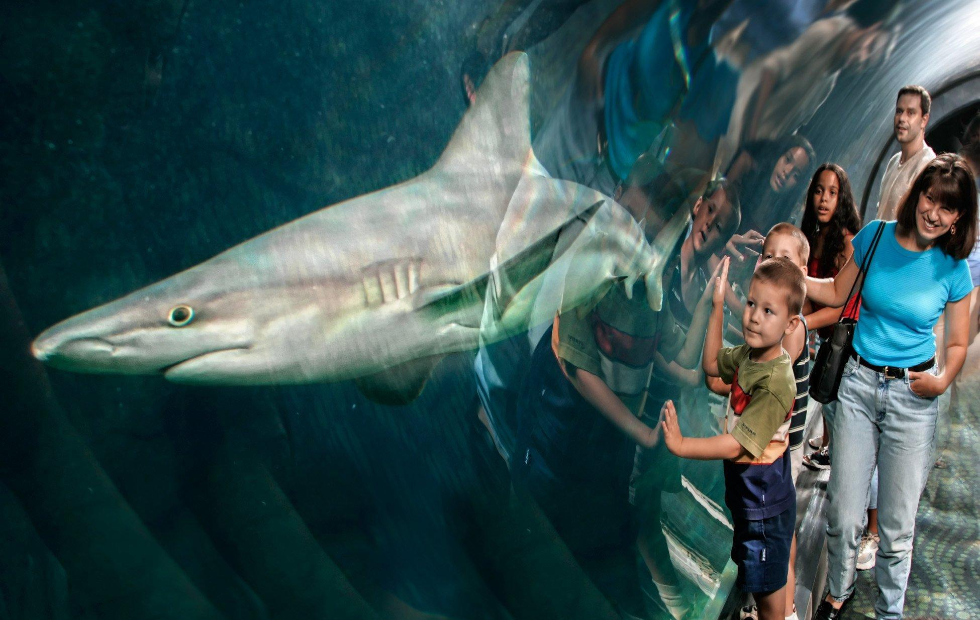 Insider 39 S Guide Aquariums Within A Day Trip Of Lehigh