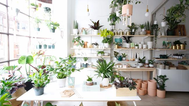 a new pasadena boutique is dedicated to nothing but indoor house plants - House Plants