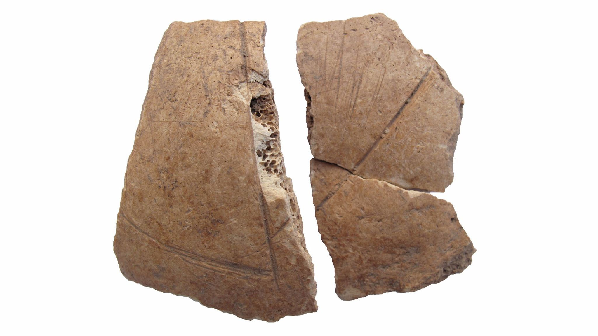 Frontal bone fragment of a skull with carvings and cut marks.