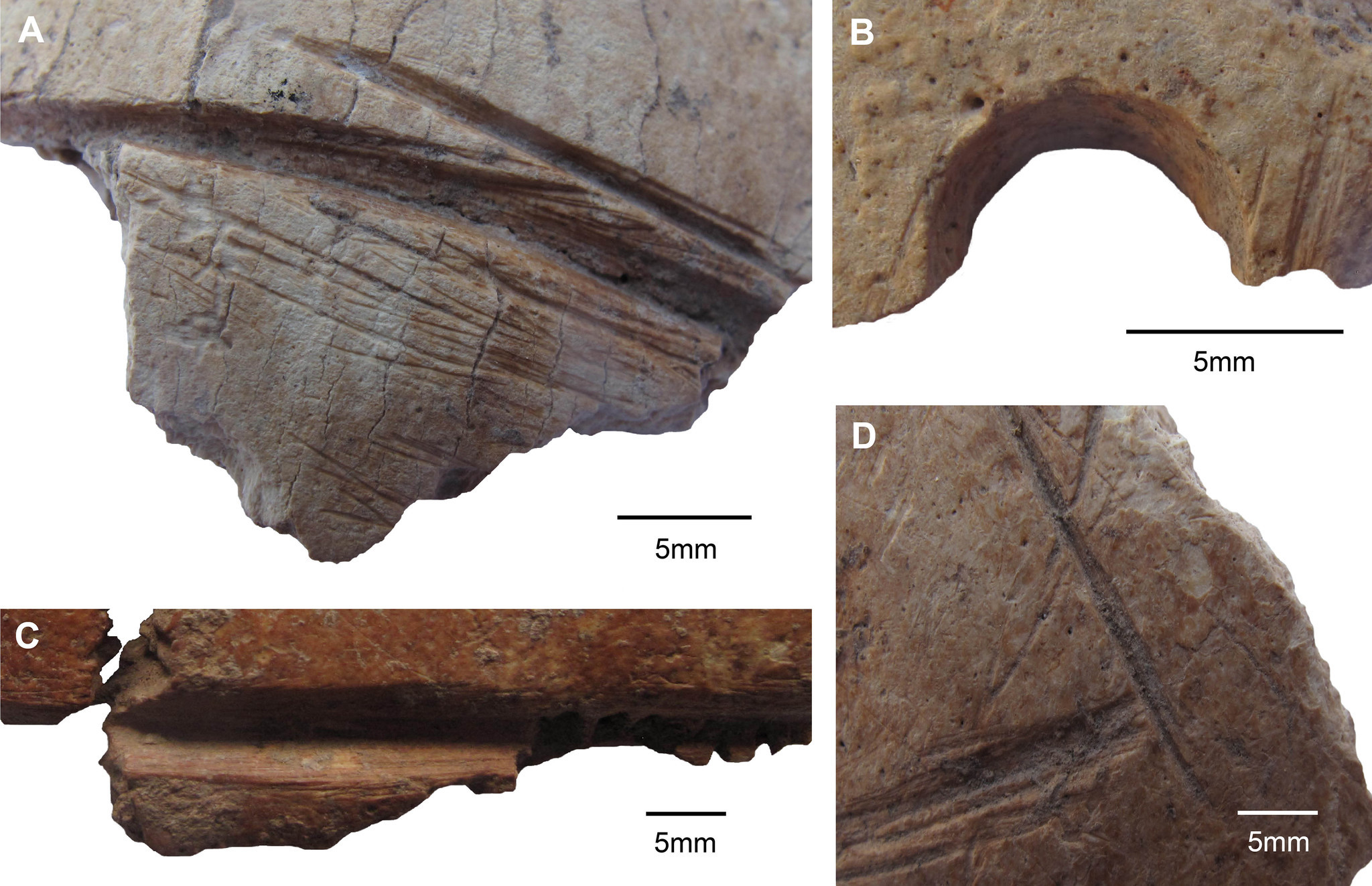 Details of artificial skull modifications show carvings (A, C and D) and a drilled perforation (B).