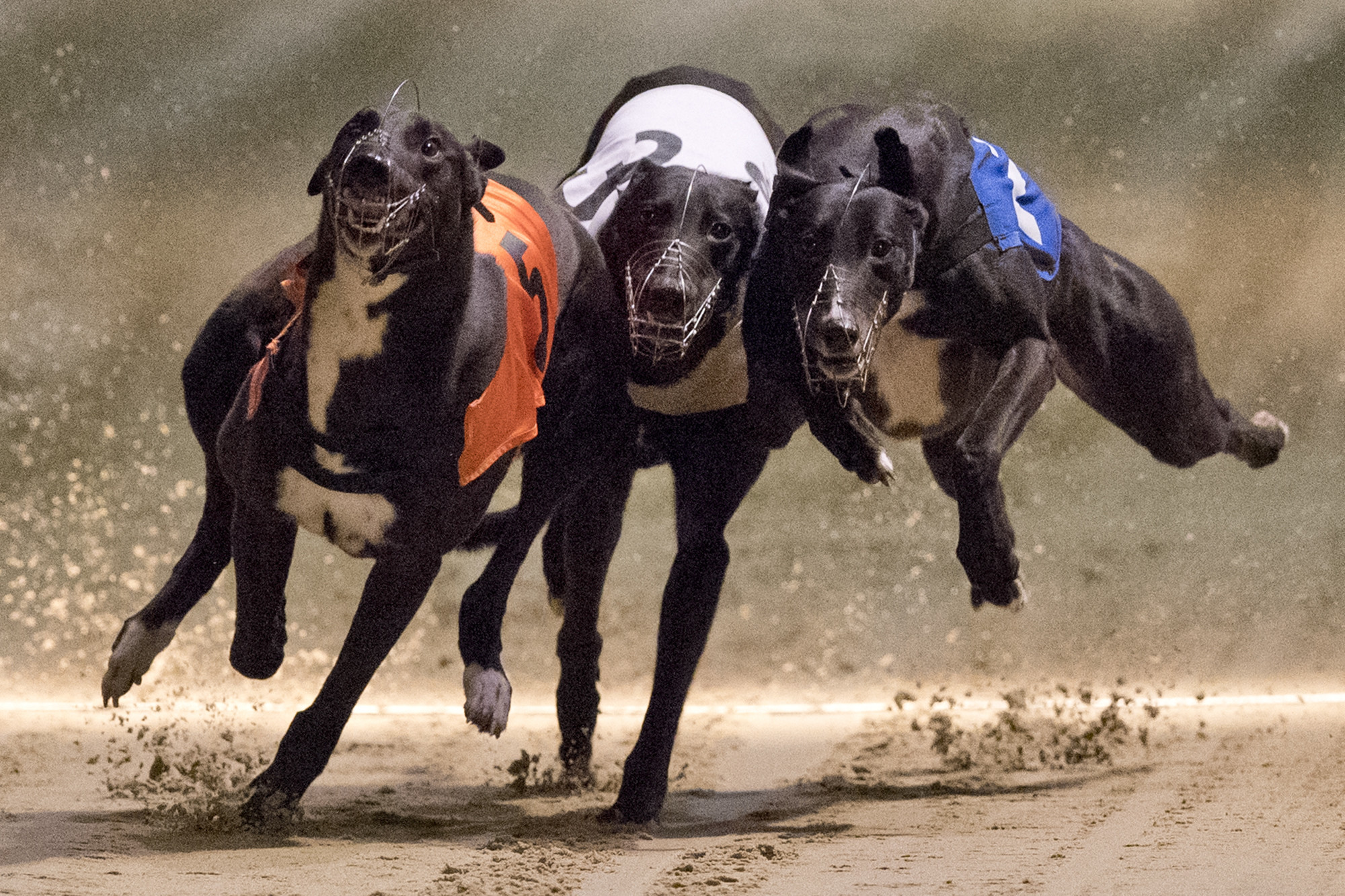 Orange Park Greyhound Dog Racing