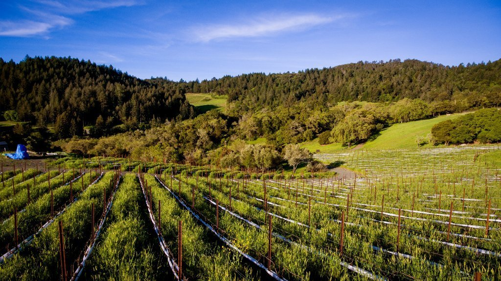 The Napa Valley fields of Mi Sueño Winery