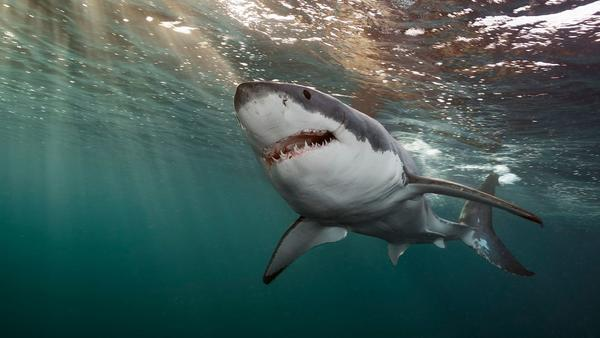 Take a look at the best book for Shark Week: 'Shark' by Brian Skerry
