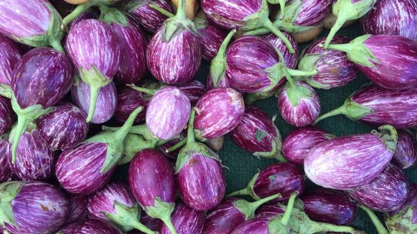 Eggplant is in season. We have recipes