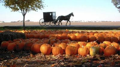 Carve out some time to visit Illinois' mega pumpkin patch