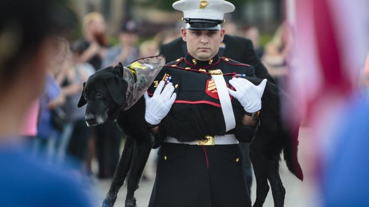 Final farewell to Marine dog