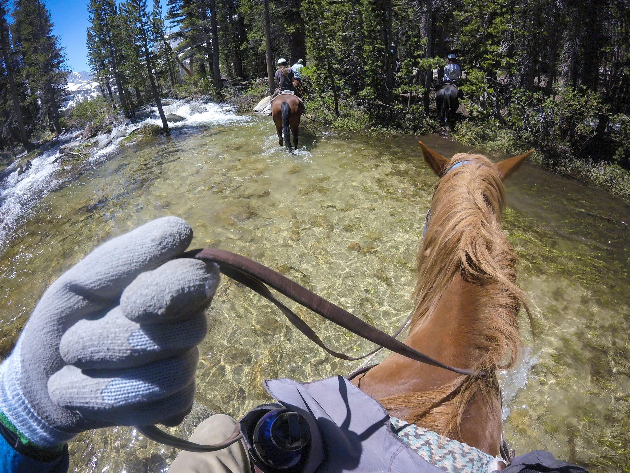 How a tenderfoot's horse trek in the Sierra showed him the magic of this pristine high country