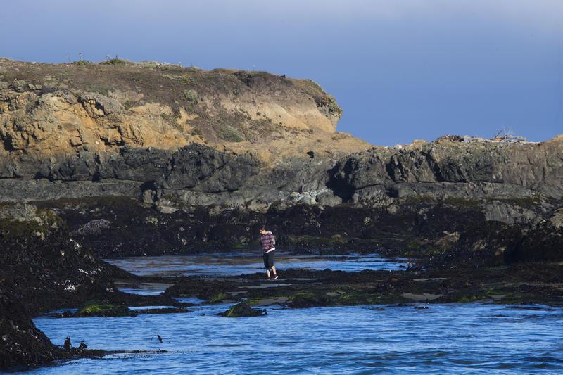 Cling To The Coast At Northern California S Sea Ranch La