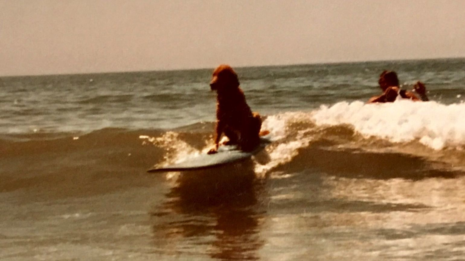Timberwolf catching a wave