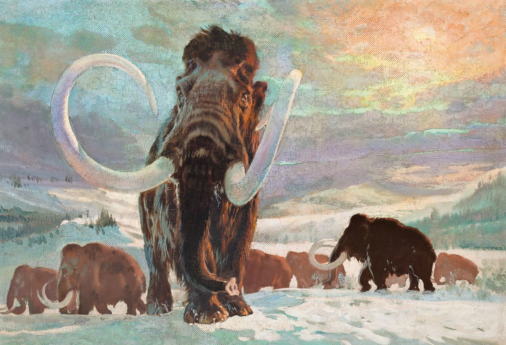 """Mammoth (Elephas primigenius)"" Zdenek Burian, 1941."